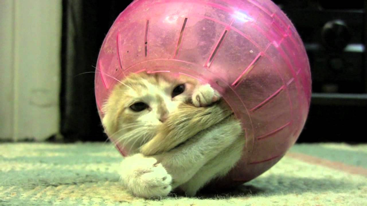 kitten stuck in a ball